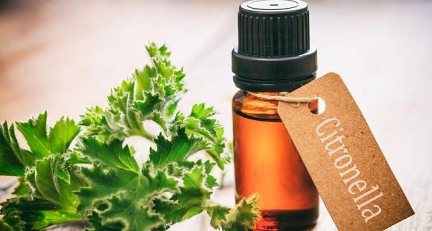 Beneficios del aceite de citronela y las maneras de usarlo