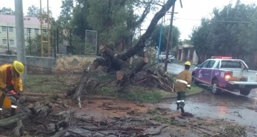 Tras el temporal, San Luis Solidario trabaja en Villa Mercedes con la Intendencia y Defensa Civil