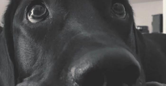 Paseadora dejó encerrada a una perra en el auto con 30 grados de calor y la mató
