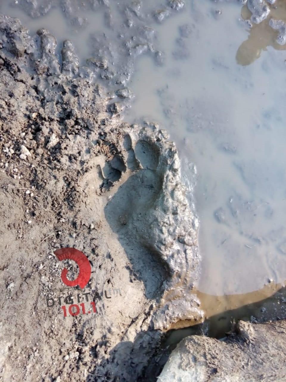 Misterio: aparecieron 2 terneros degollados en Quines