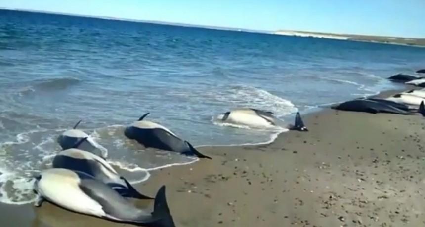 Macabra aparición de 1.100 delfines muertos en Francia en lo que va del año