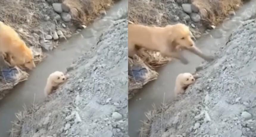 VIDEO: La desesperación de una perra por su cachorro a punto de caer al río