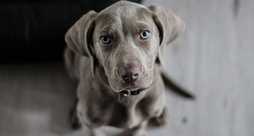 Alarma mundial por virus que se transmite de perros a humanos