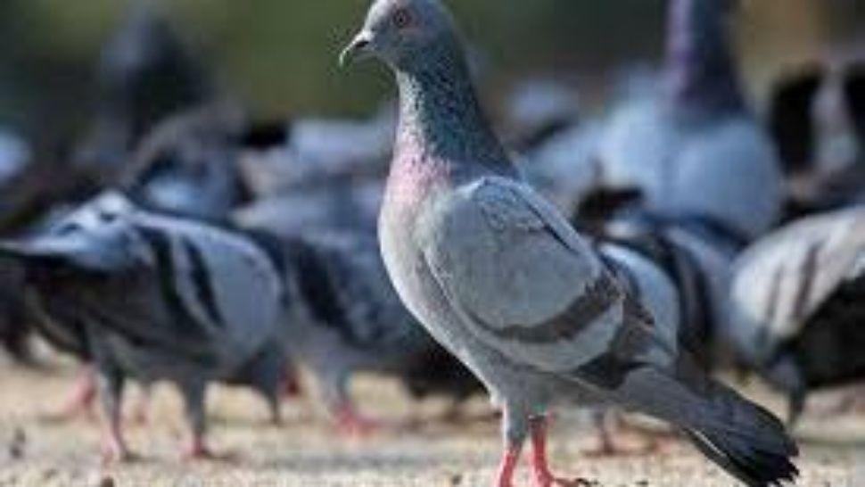 Pagan fortuna por casa bañada en caca de paloma