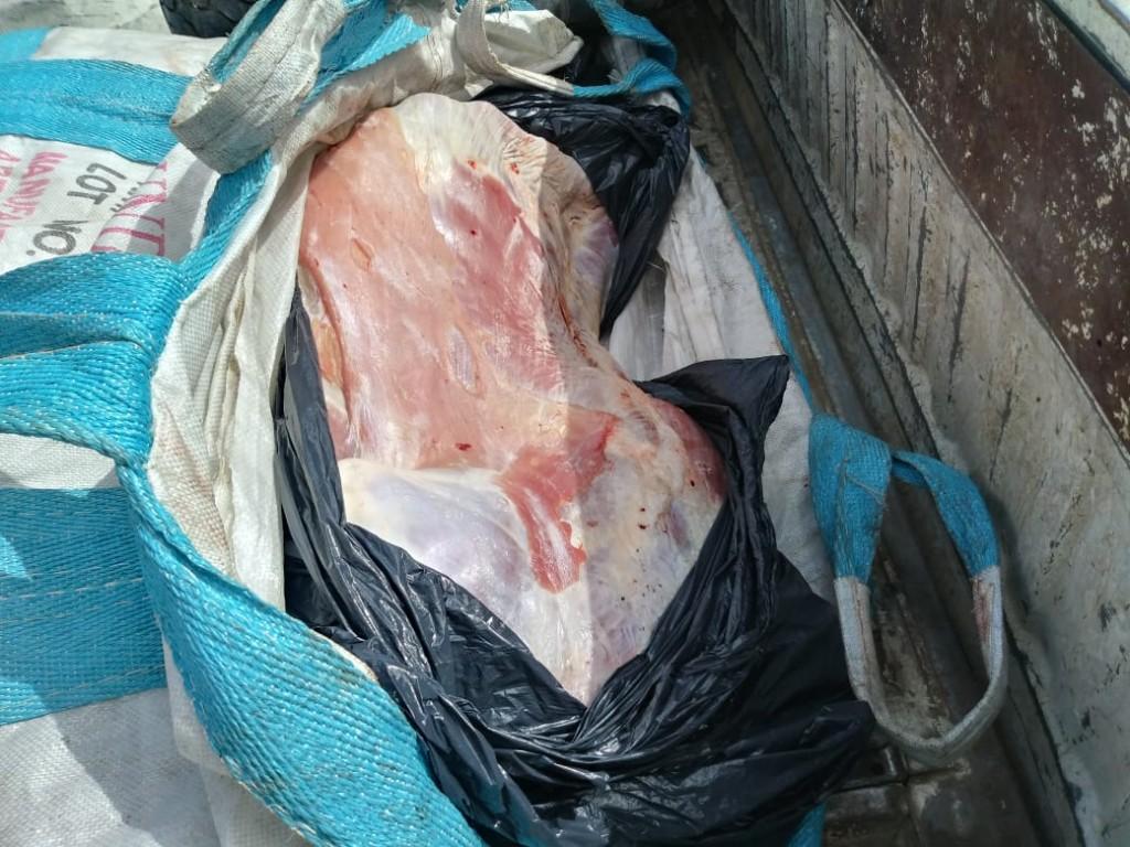 Noticia Destacada Principal Parte de Prensa Nogolí: fueron detenidos tres hombres que transportaban animales faenados