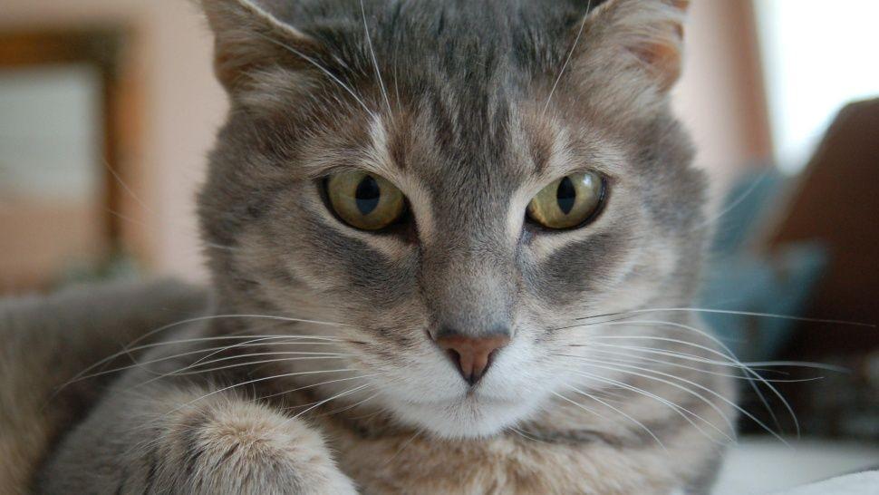 El desesperado pedido de un gatito que no quiere ir al veterinario