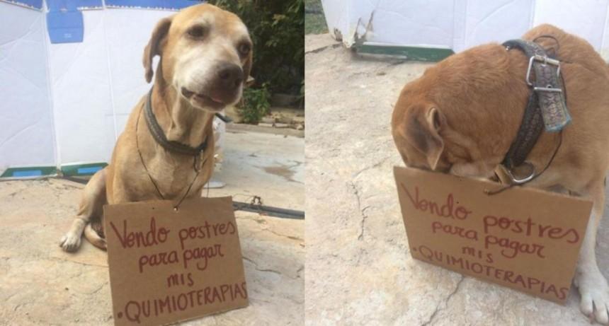Perrito vende postres para pagar su quimioterapia