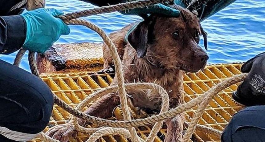 Video sorprendente: perro apareció nadando en el mar a 220 kilómetros de la costa