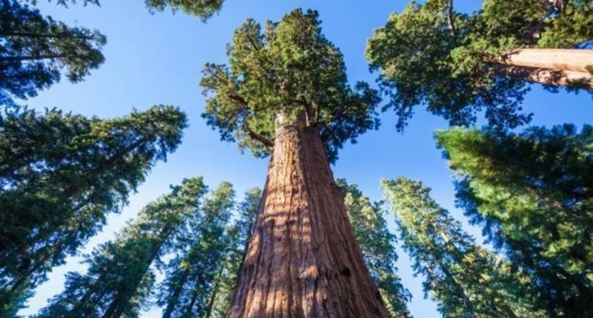Cortan árbol gigante y casi aplasta a nenito y a un abuelo