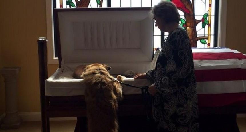 La historia detrás de la foto viral de un perro despidiendo a su dueño muerto