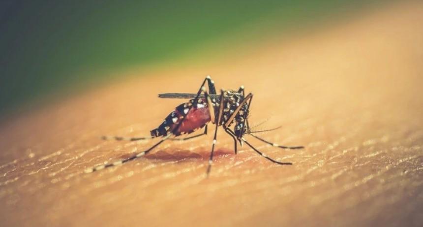 El dengue, la epidemia que crece sin prensa