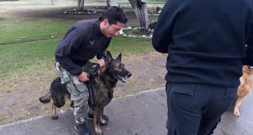 La Policía de San Luis cuenta con un binomio certificado nacionalmente en detección de narcóticos y estupefacientes