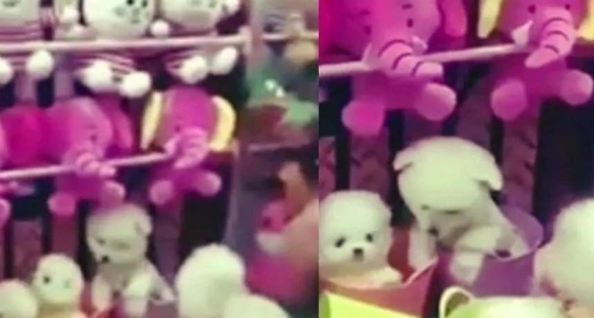 Máquina de peluches entrega como premio perros reales