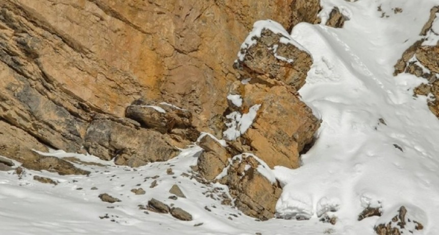 El leopardo en la nieve, un desafío viral sobre una especie en extinción