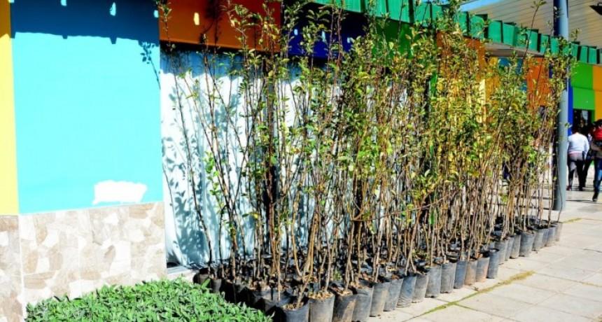 Se entregarán plantas frutales y aromáticas en Pringles y Ayacucho