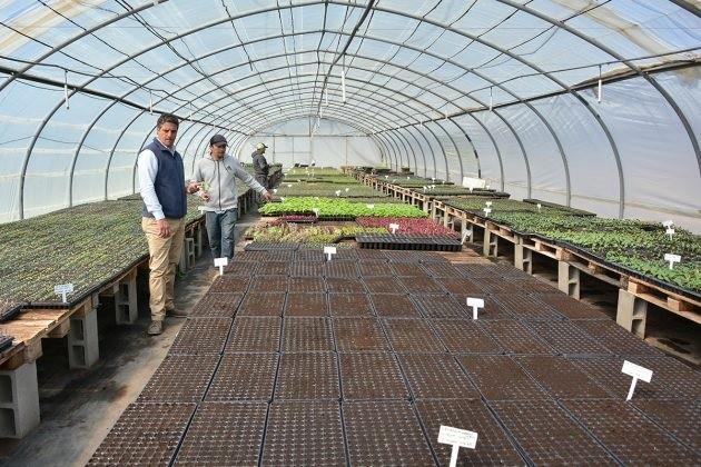 Sol Puntano incluirá bandejas de plantines a su servicio de delivery
