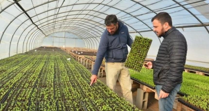 Sol Puntano aumenta su producción de plantines para abastecer explotaciones comerciales y municipios
