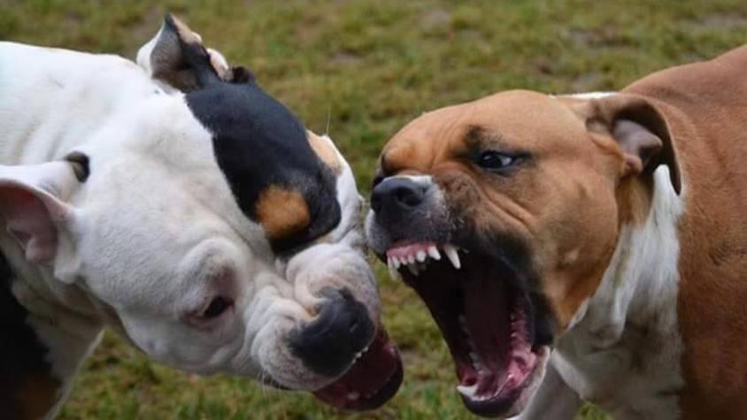 Imputaron al dueño de los perros que atacaron a un hombre en Las Heras