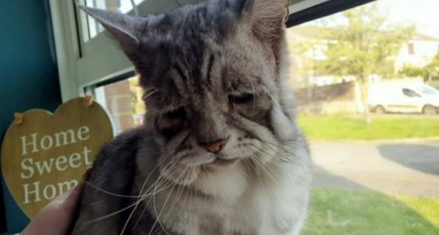 ¿El sucesor de Grumpy Cat? Es el gato más triste de la web pero tiene a todos enamorados