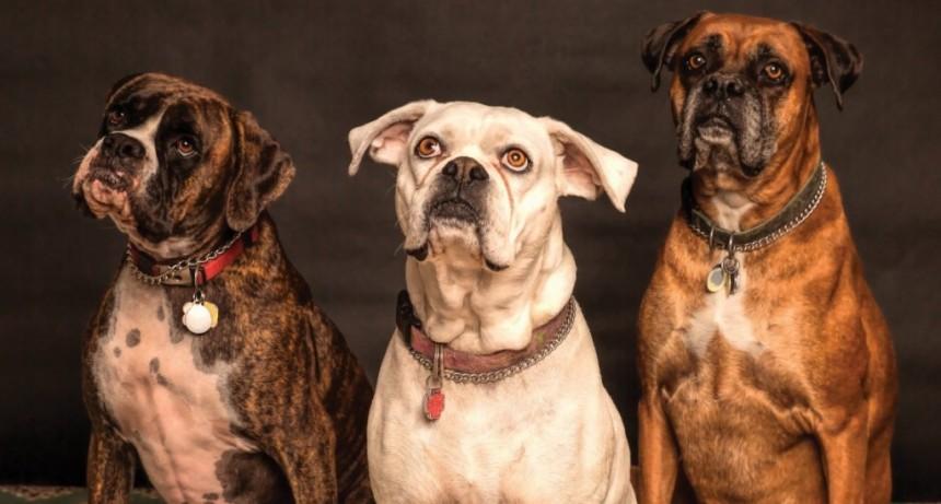 Descubrieron la verdad detrás de la irresistible mirada de tristeza de los perros
