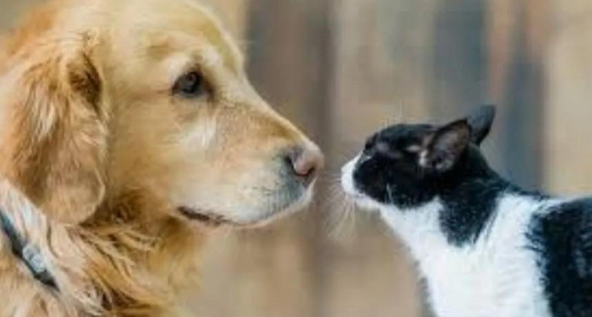 Aprueban multas de hasta 42 mil pesos a quienes maltraten a animales domésticos