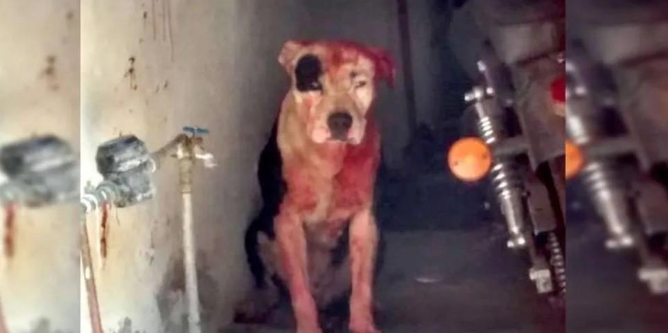 Un pitbull mordió y mató a nene de un año