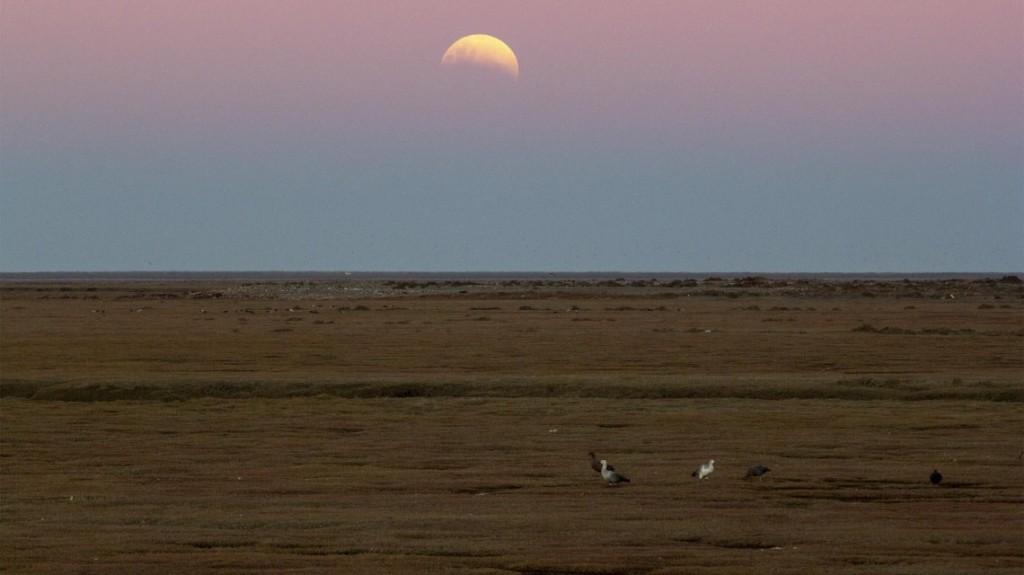 El segundo eclipse parcial de Luna del año se pudo apreciar desde Argentina