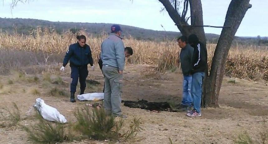Renca: realizaron allanamientos por robo de ganado