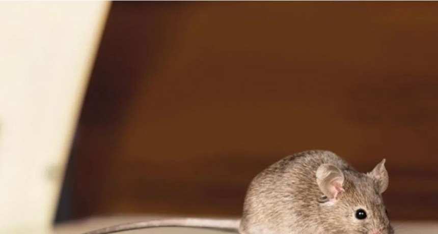 ¡Un asco! Se fue de shopping y encontró ratones caminando por la ropa