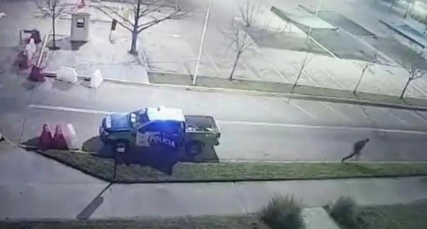 Policías dejaron solo a un preso y se escapó esposado de un patrullero