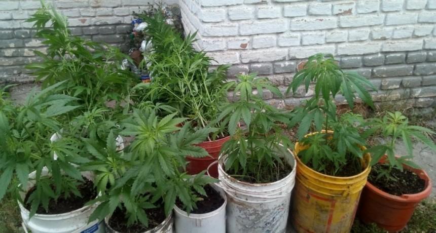 El Volcán: la Policía secuestró plantines de marihuana