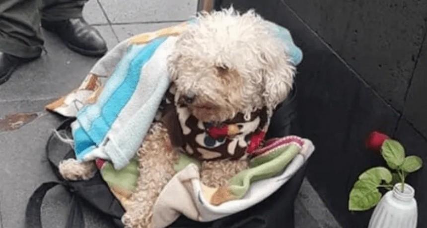 Vende chicles en la calle para que su perro no pase hambre