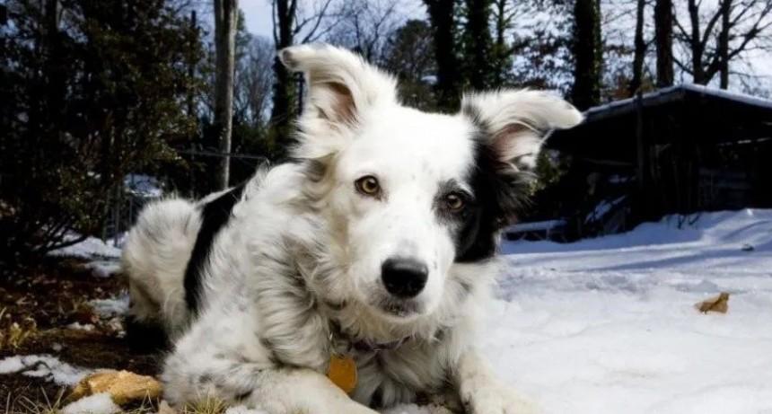 Murió el perro más inteligente del mundo