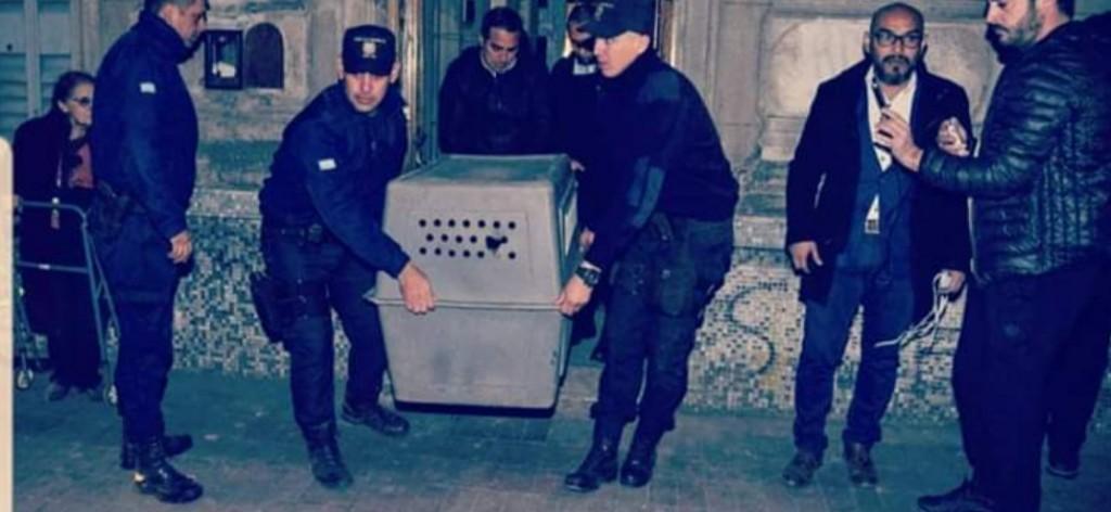 San Luis: La Policía rescató a 13 perros maltratados