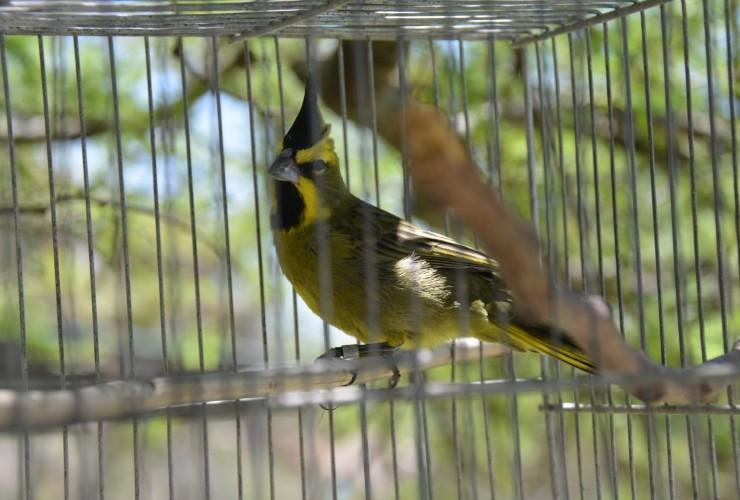 Las 42 aves rescatadas comienzan su período de rehabilitación