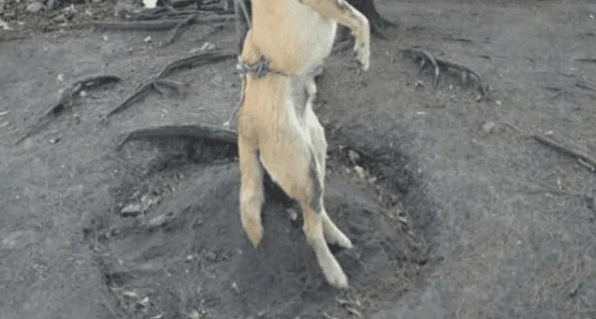 Ahorcó a su perrita porque se portaba mal y lo imputaron por maltrato animal