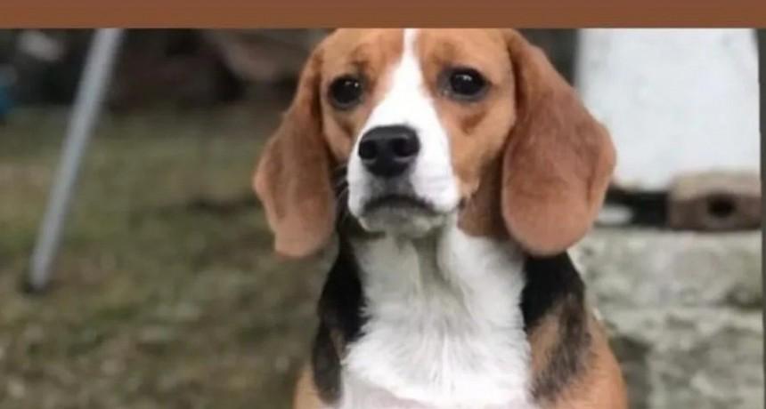 Alarma el incremento del robo y secuestro de perros
