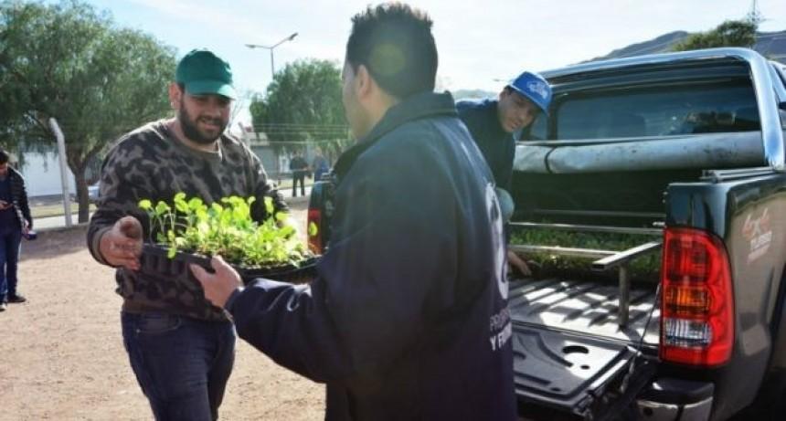 """""""Una familia, una huerta"""" entrega este martes frutales y aromáticas en La Punta"""