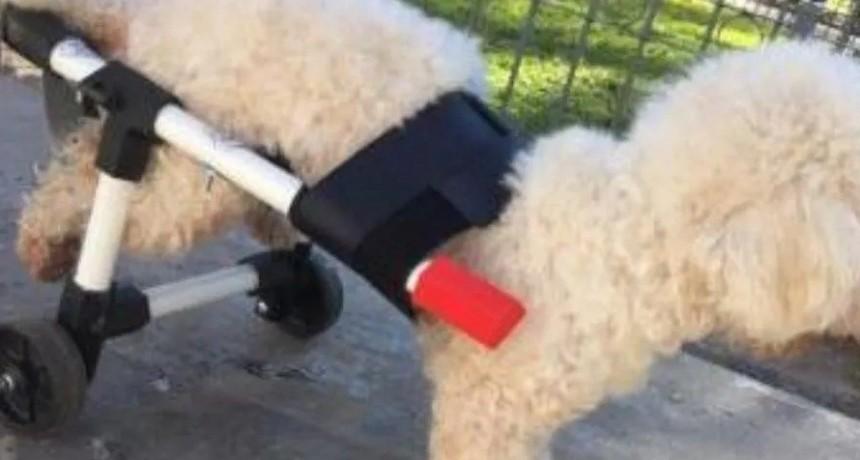 Un joven fabrica y regala sillas de ruedas para perros