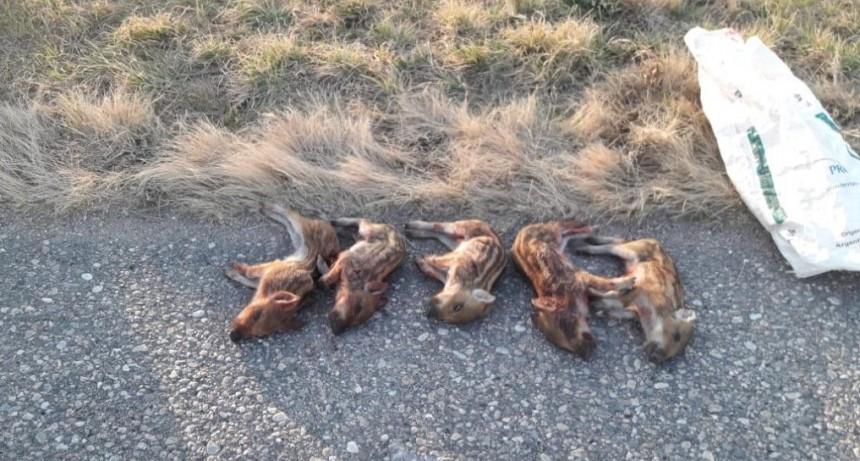 Fraga - El Morro: la Policía Ambiental interceptó cazadores furtivos