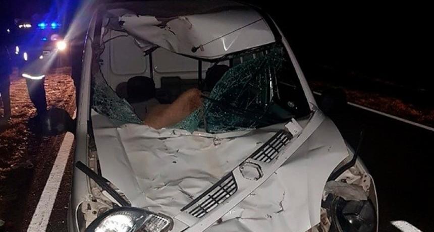 Villa de la Quebrada: ocupantes de un auto fueron rescatados tras chocar con un caballo