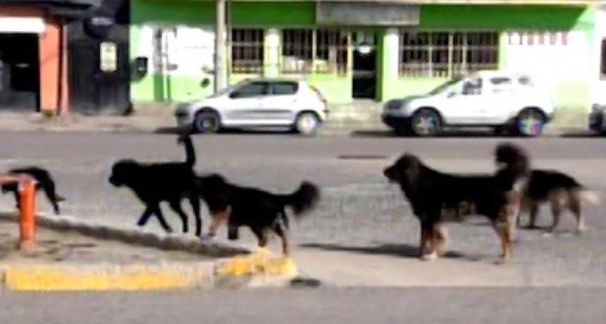 Aparecieron más de 60 perros muertos en Río Turbio tras comer unos 70 kilos de carne envenenada
