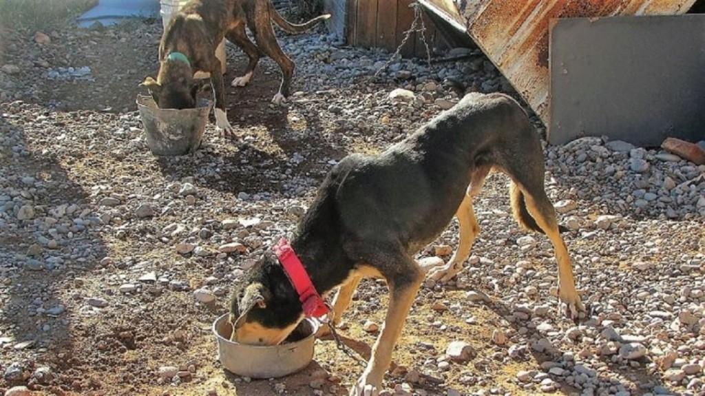 En un fallo histórico, condenaron a un hombre por el brutal maltrato al que sometió a sus perros