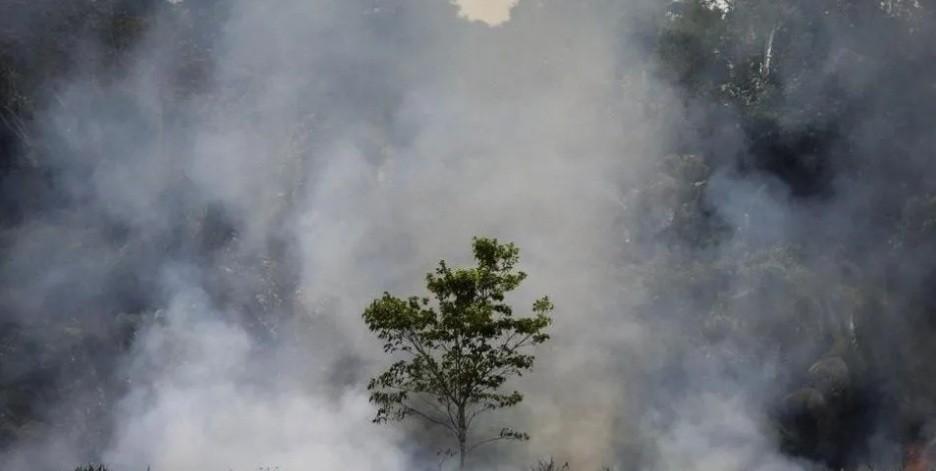 La deforestación en el Amazonas brasileño saltó un 222% en agosto