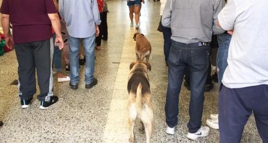 Las mascotas también fueron a votar