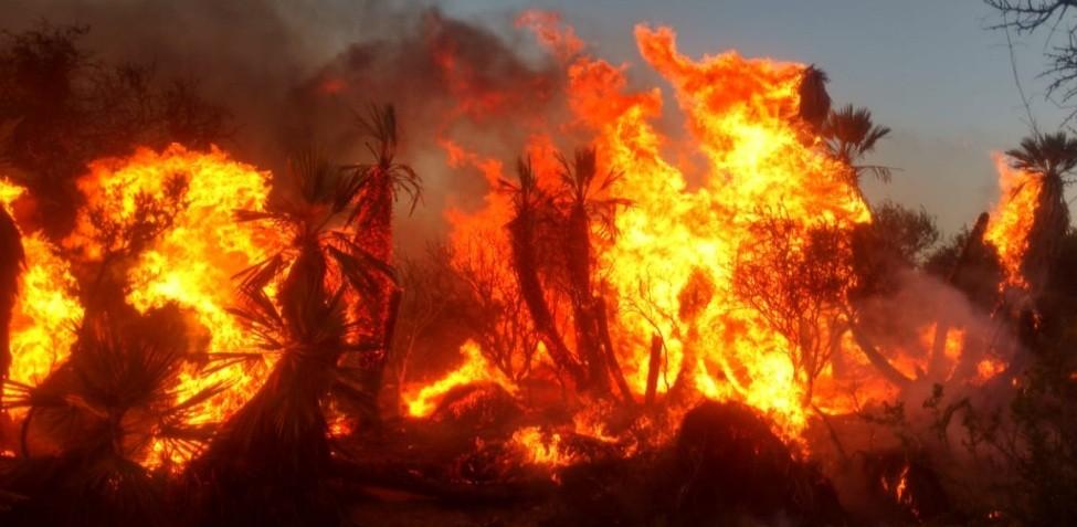 Bomberos combatieron por 48 horas un incendio forestal con varios frentes de fuego en San Francisco del Monte de Oro