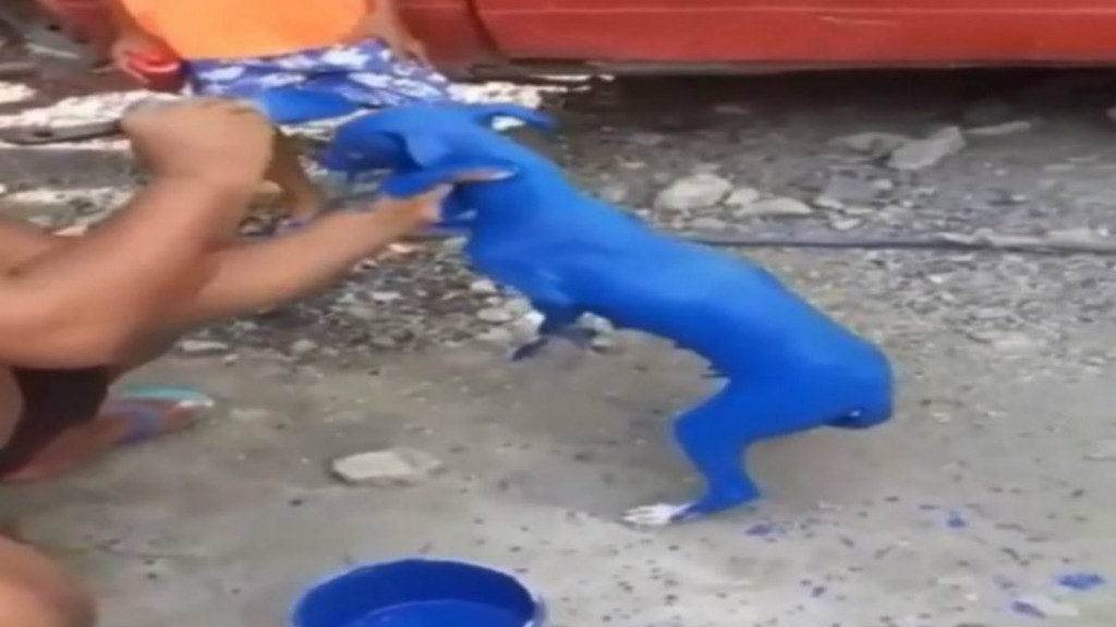 Pintó a su perro de azul porque le dijeron que curaba la sarna: lo detuvieron
