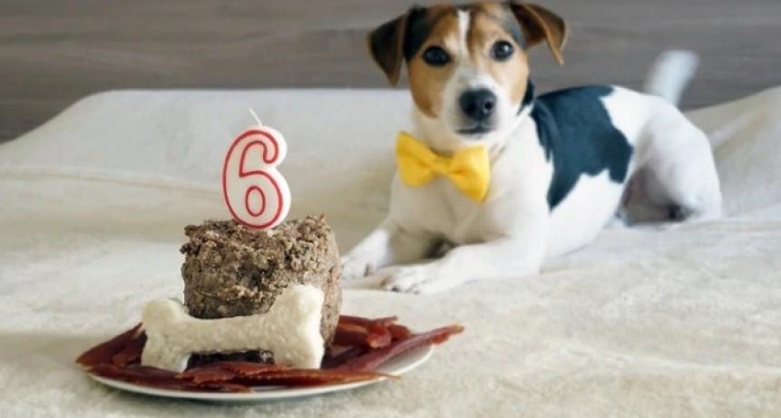 Adiós a los mitos: así se calcula la edad humana de un perro