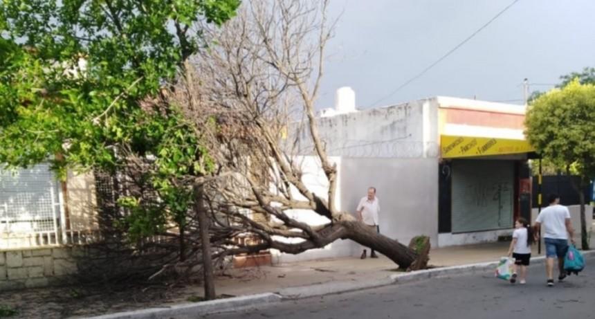 El viento causó daños en la ciudad