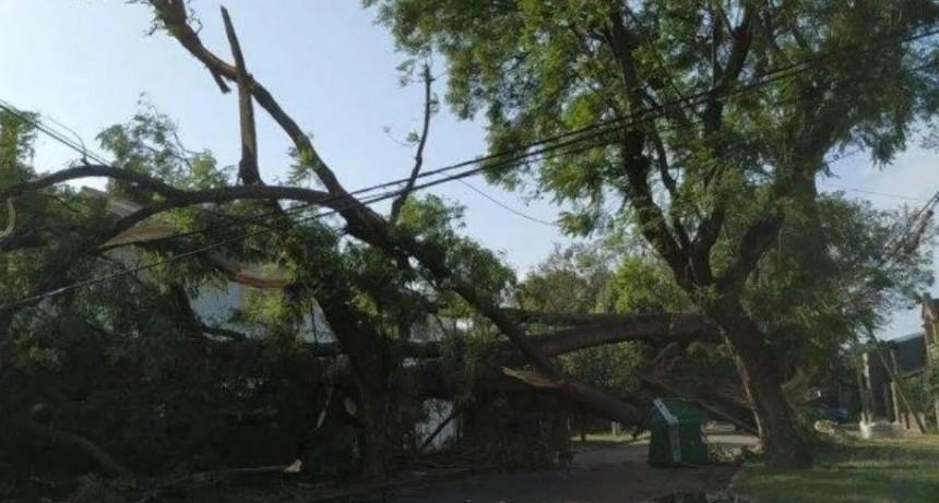 Murió aplastada por un árbol en medio de fuerte temporal en Santa Fe